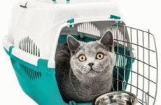 Интернет-магазины, где дешево можно купить товары для кошек