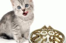 Низкие цены на корма для кошек: сравниваем предложения и выбираем
