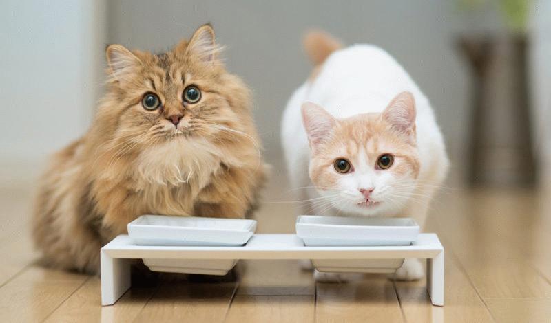 Купить еду котятам